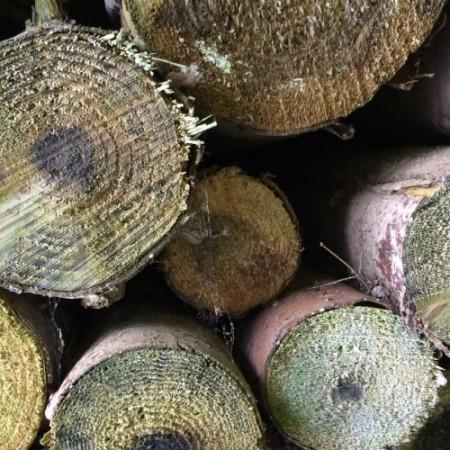 Kaminholz Stapeln So Gelingt Der Holzstapel