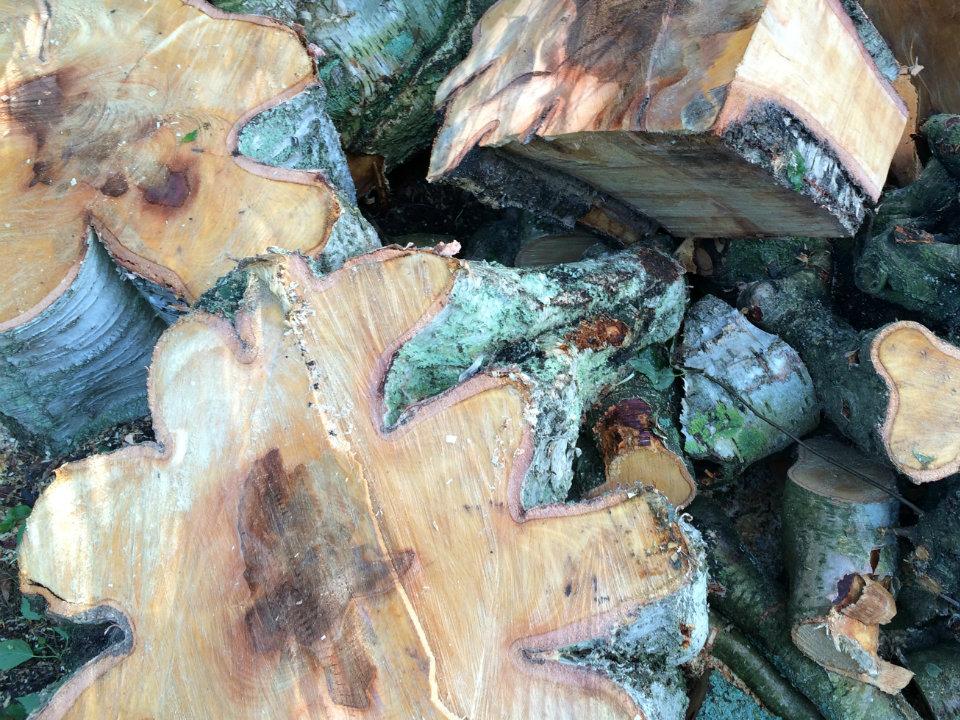 Brennholz Welche Holzart Sollten Sie Wahlen