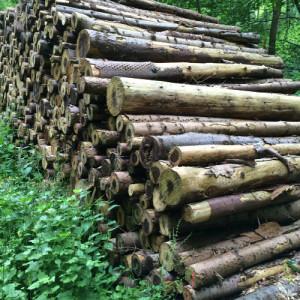 Træ_500x500 px